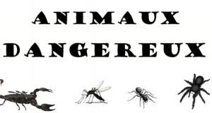Les animaux dangereux en vacances