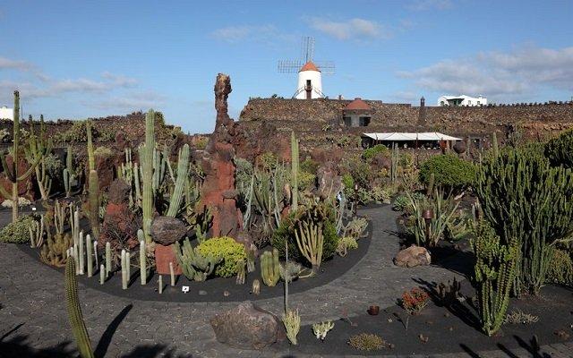 jardin de cactus à lanzarote