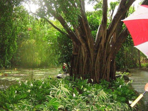 Le jardin botanique de deshaies for Boutique jardin botanique