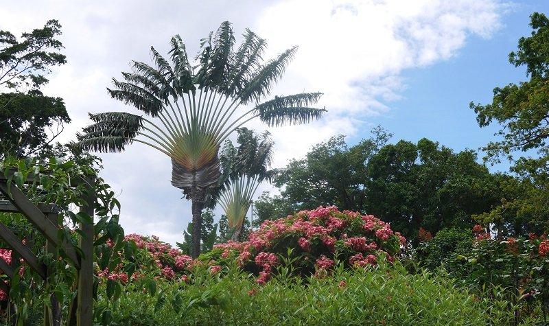 jardin botanique de deshaies en guadeloupe