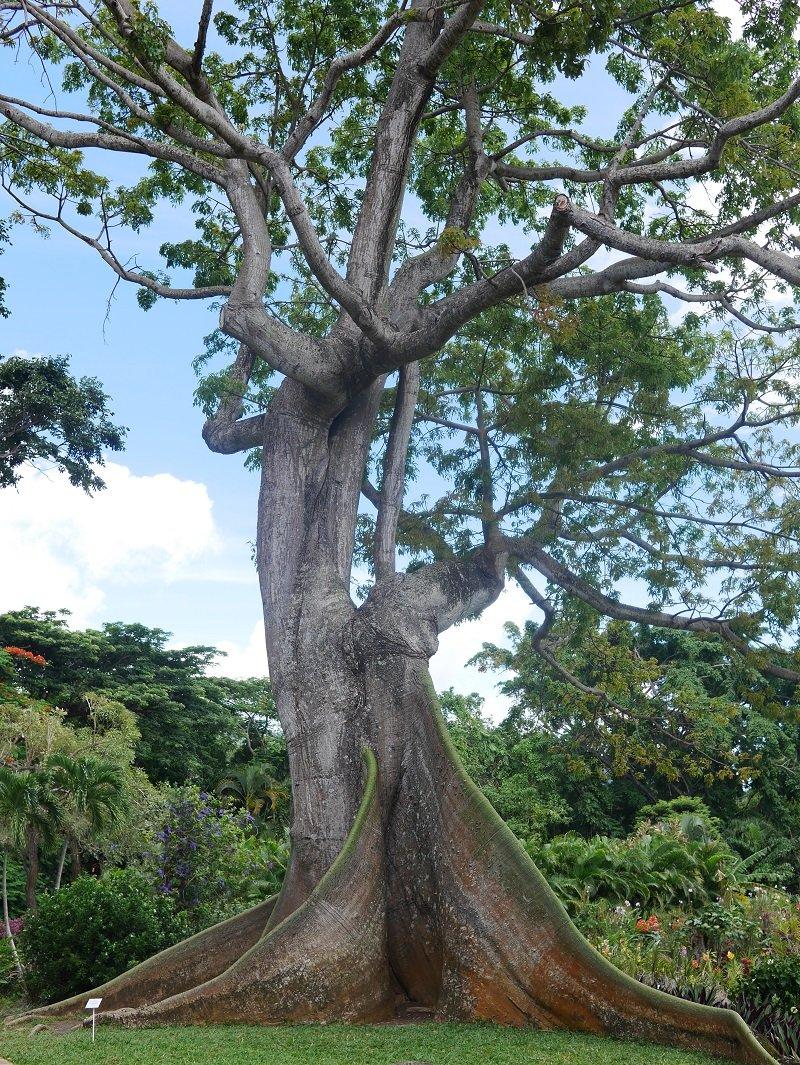 jardin botanique de deshaies guadeloupe
