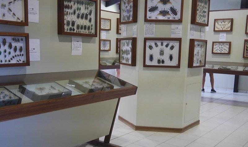 le musée du rhum en guadeloupe