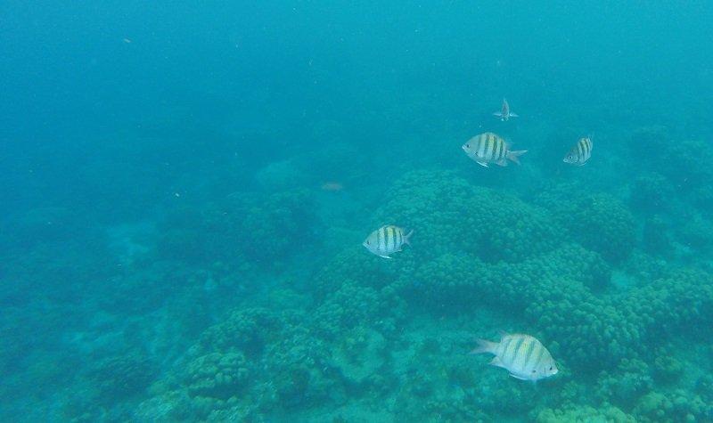 poissons plage de malendure