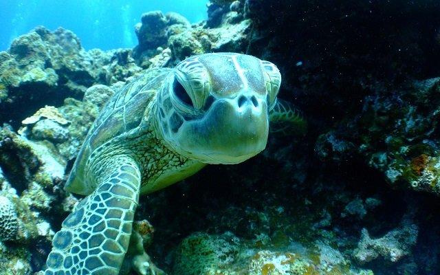 visiter la polynesie