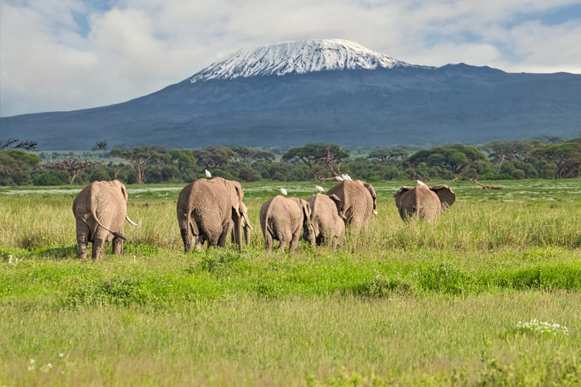 éléphants à amboseli