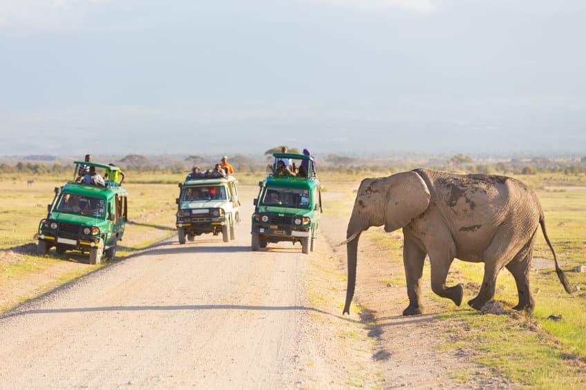 parc national d'ambolesi