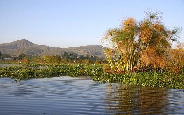 lac Naivasha kenya
