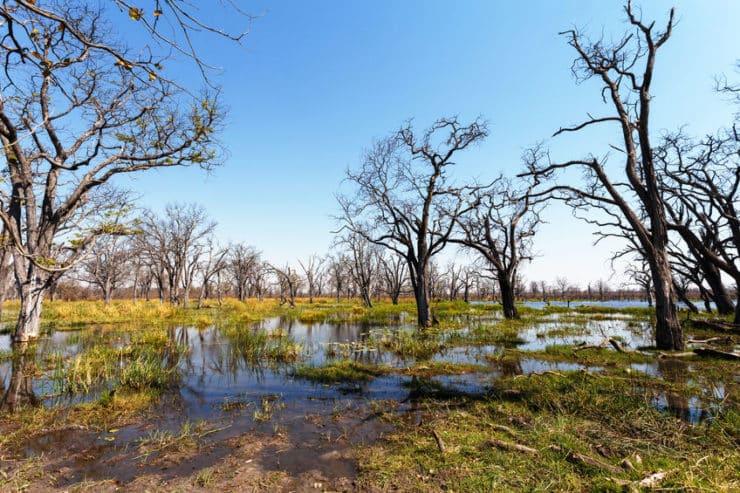 inondation delta de l'okavango