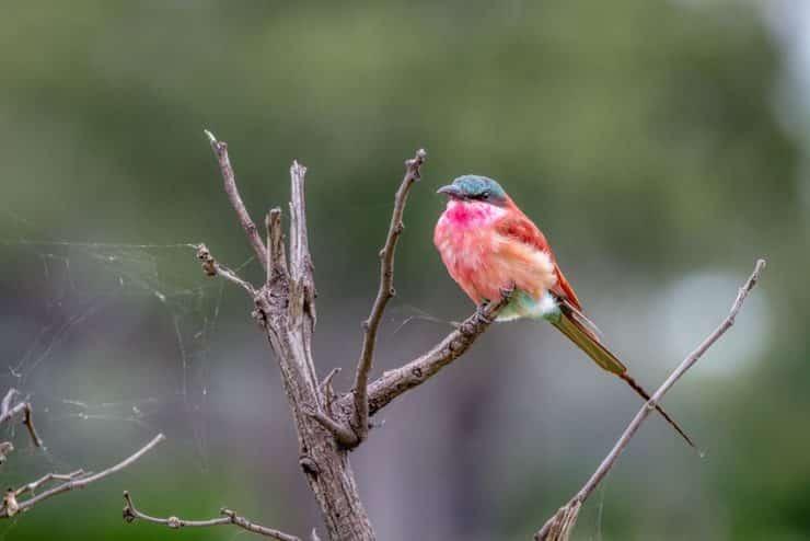delta de l'okavango oiseau