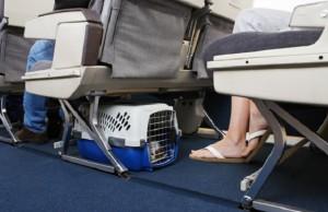 Prendre l'avion avec un animal de compagnie