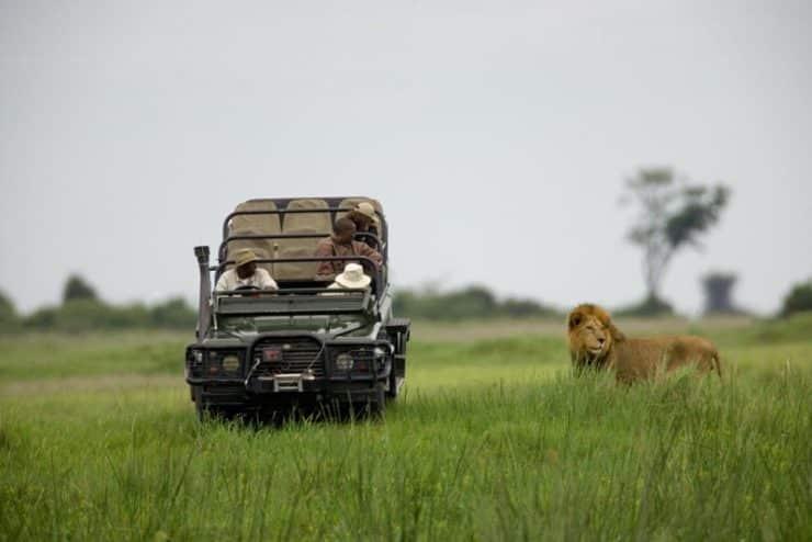 lion duba plains