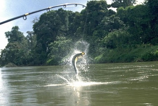 Pêcher au Costa Rica