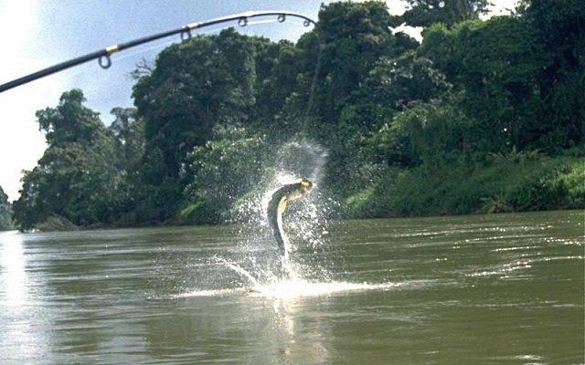 Pêcher au Costa Rica