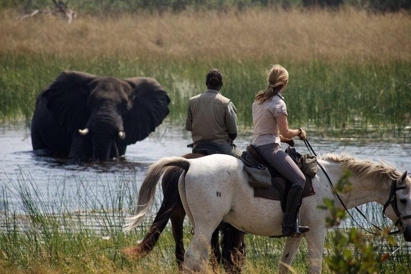 safari cheval okavango