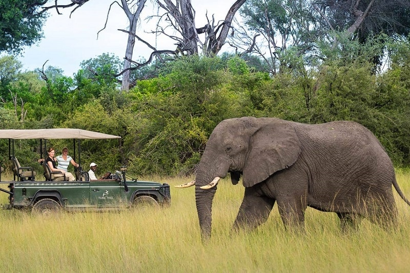 réserve de moremi safari