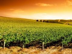 vin Prince-Édouard