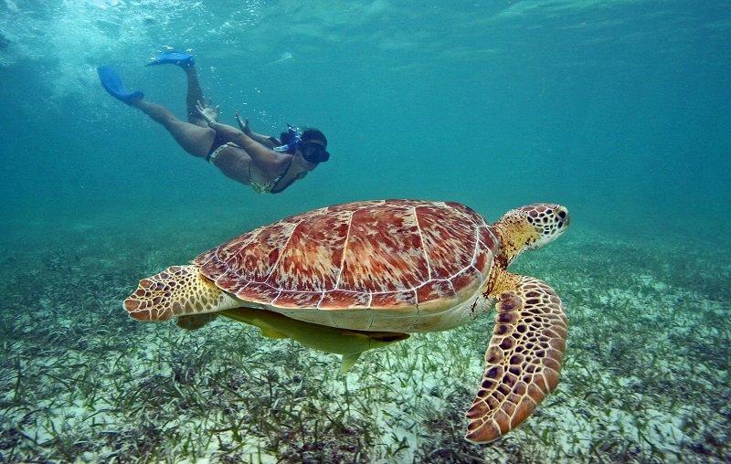 nager avec tortue akumal