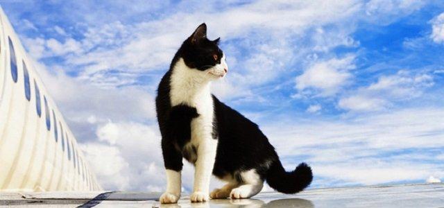 Conseils pour voyager avec des chats