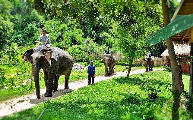 village éléphants laos