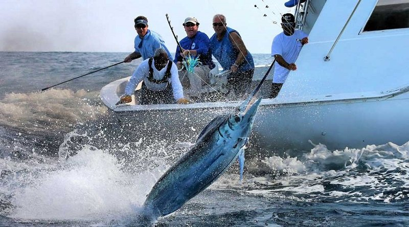 International Marlin Tournaments