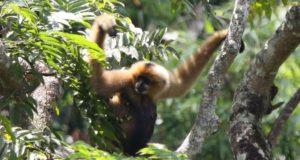 Réserve naturelle de Bokeo laos