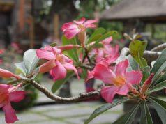 Conseils pour une lune de miel à Bali