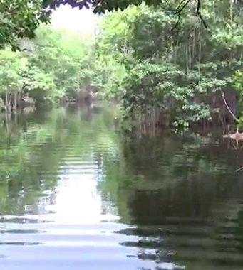 black river en jamaique