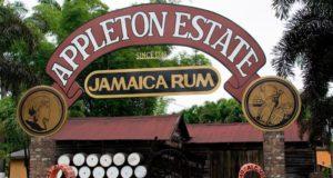 fabrique de rhum appleton jamaique