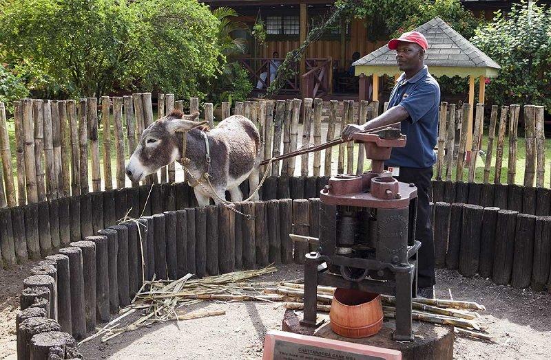 fabrique rhum appleton jamaique