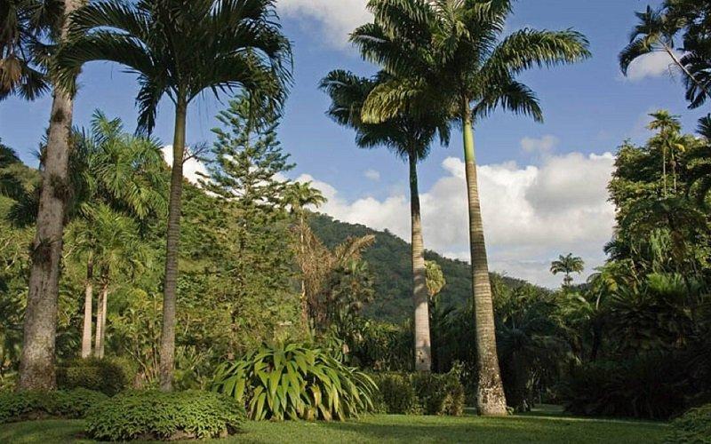 jardins castleton jamaique
