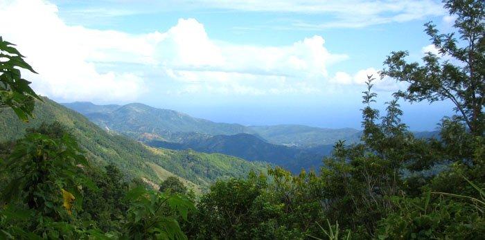 montagnes bleues de jamaique