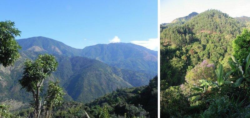montagnes bleues de la jamaique