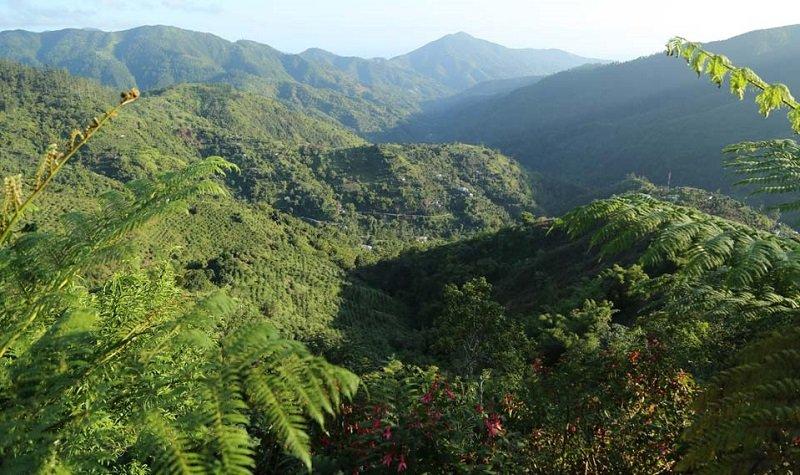 montagnes bleues jamaique