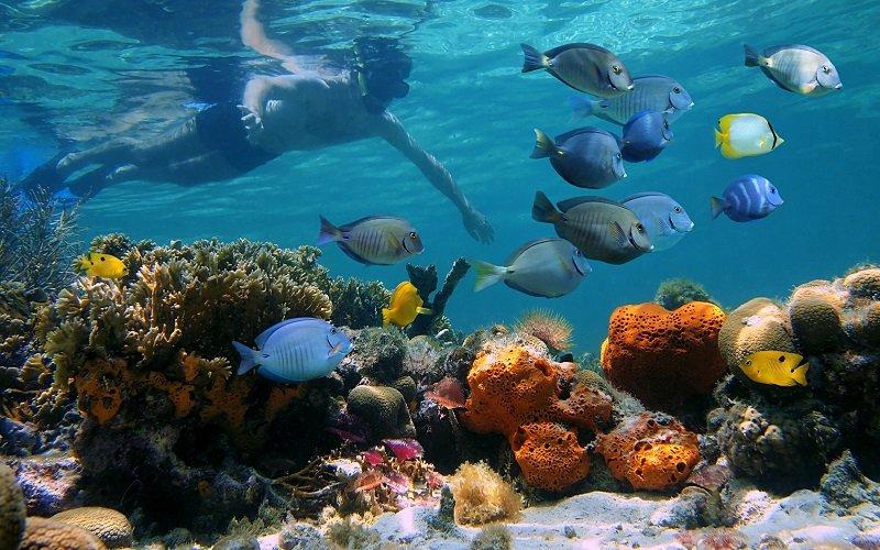 snorkeling andros bahamas