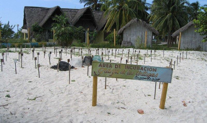 playa tortuga cayo largo