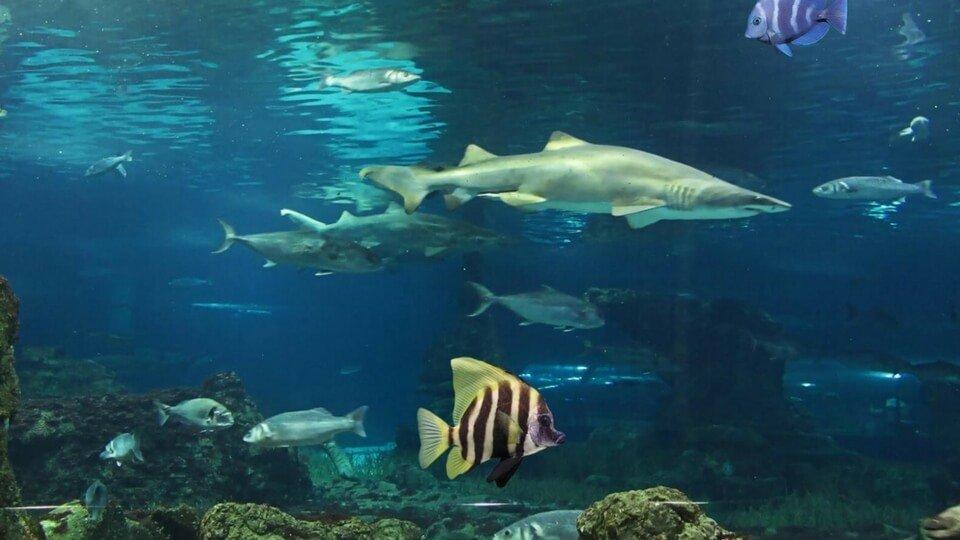 aquarium de lanzarote le plus grand des les canaries On aquarium lanzarote precio