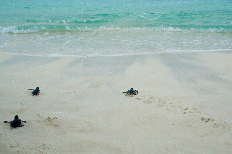 cayo largo tortues