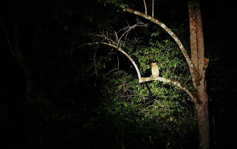 rivière Kinabatangan nuit