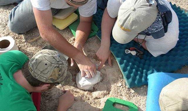 Paleontologie parc badlands