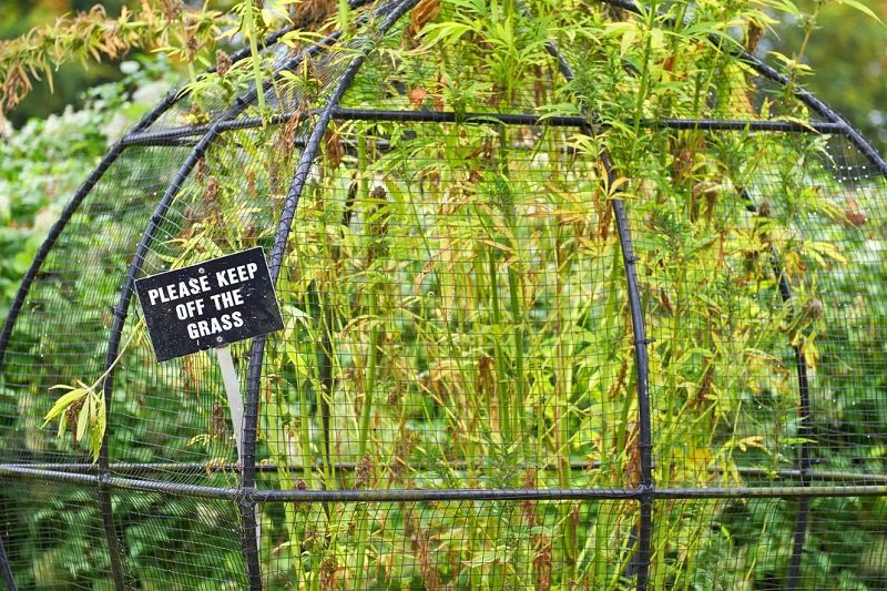 jardin des poisons alnwick