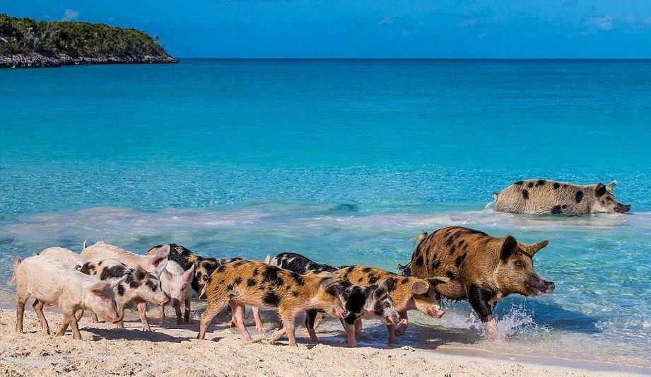 plage des cochons