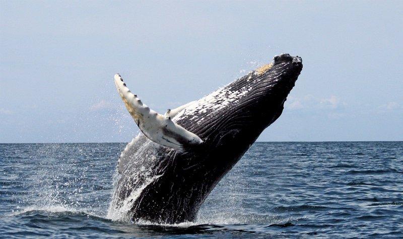 voir les baleines au sri lanka