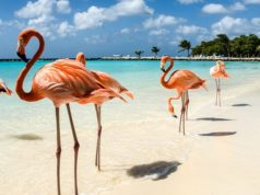 plage des flamants rose