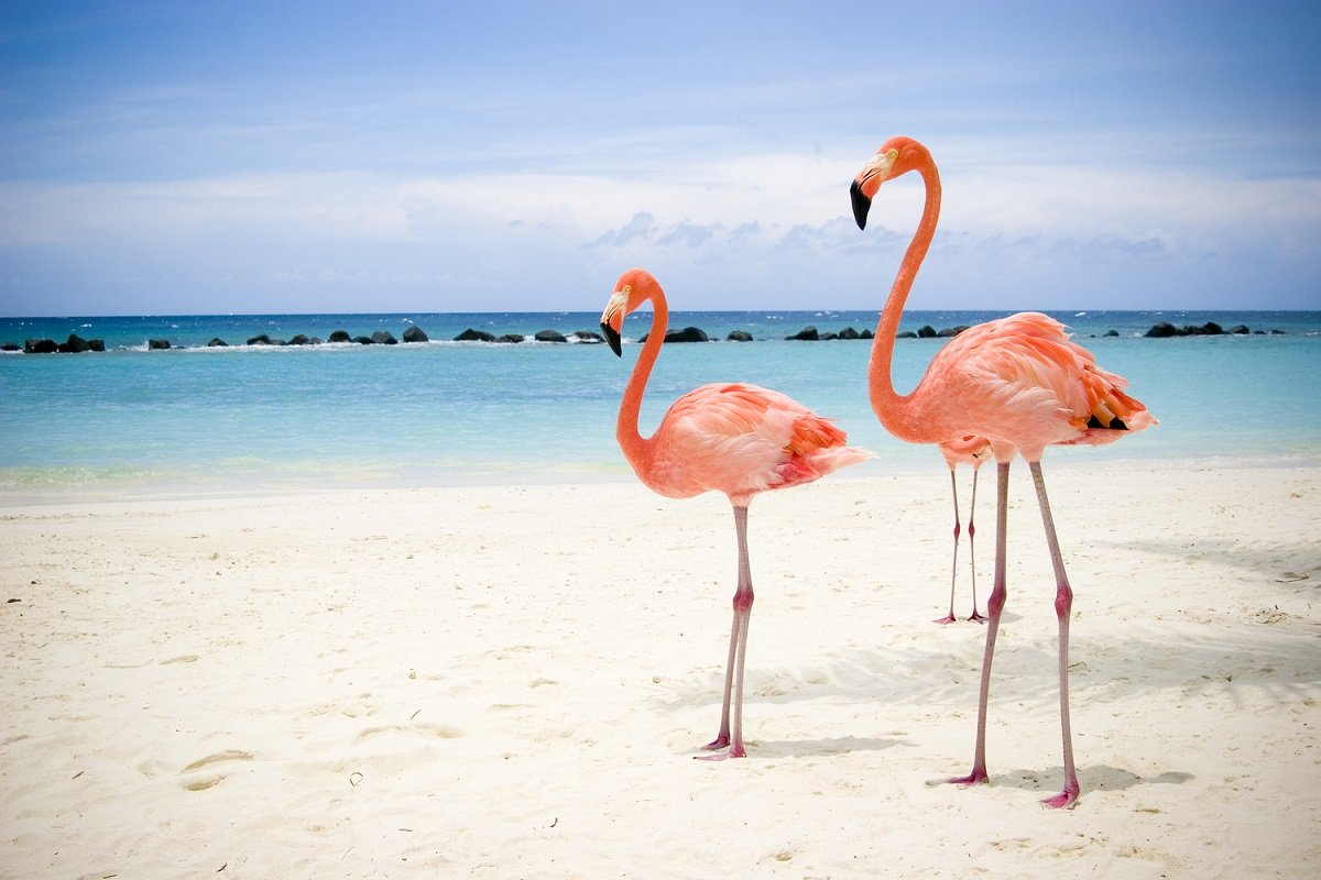 plage des flamands rose