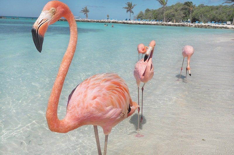 plage des flamands rose aruba