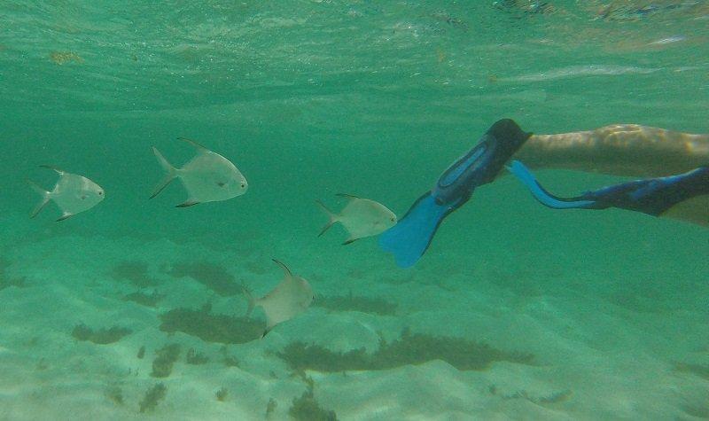 snorkeling petite terre