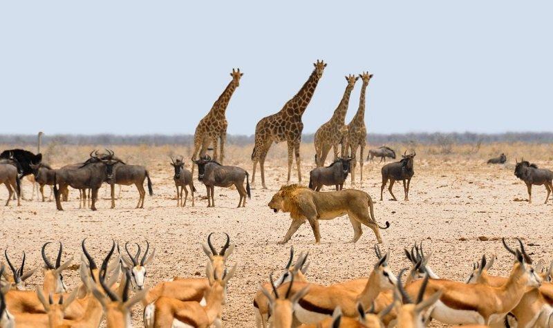 animaux excursion voyage namibie