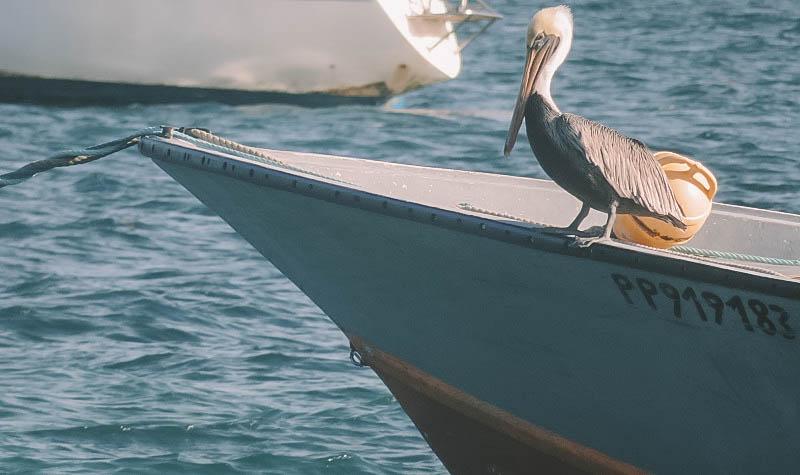 gosier oiseau