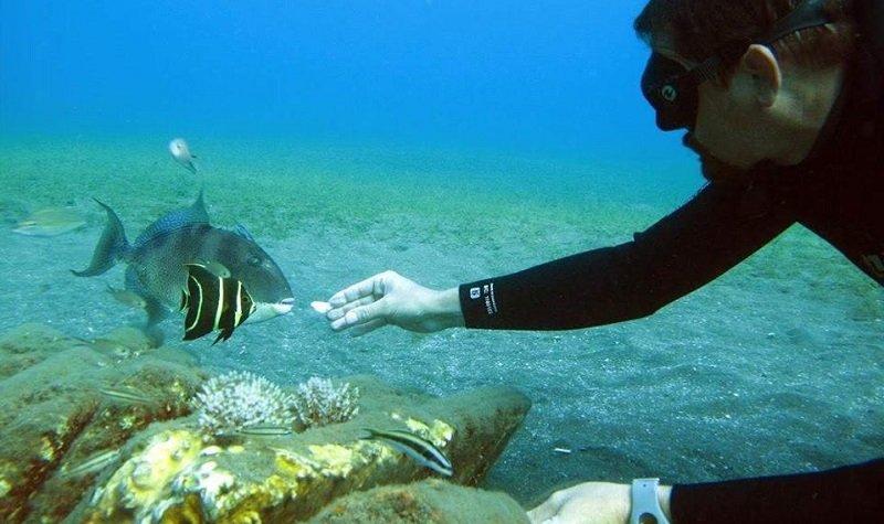 snorkeling pointe noire