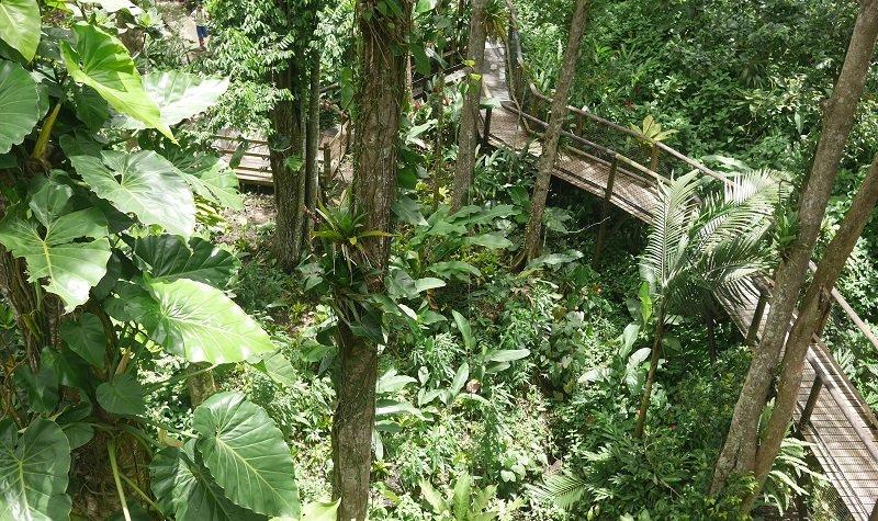 route de la traversée zoo de guadeloupe